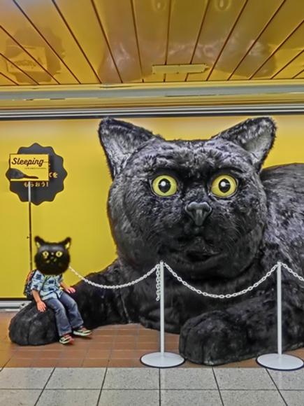 黒猫大和くん.png